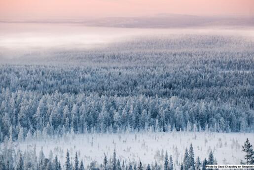Skogplanting kan gi høyere temperaturer lokalt