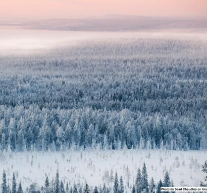 – Skogplanting i Norge kan lokalt øke temperaturer om våren med så mye som 1 grad