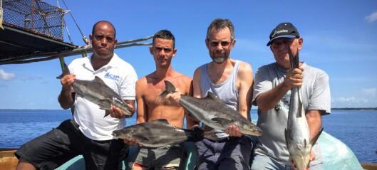 Norske forskerne hjelper Cuba med fiskeoppdrett