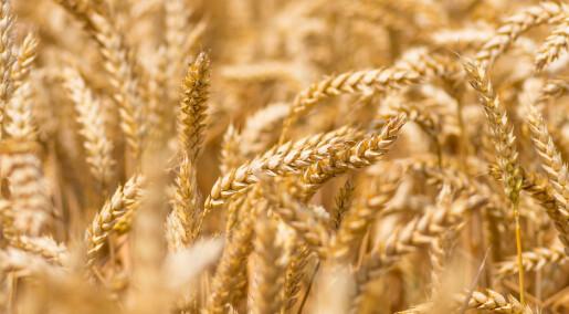Kan all mat bli økologisk – og er det smart?