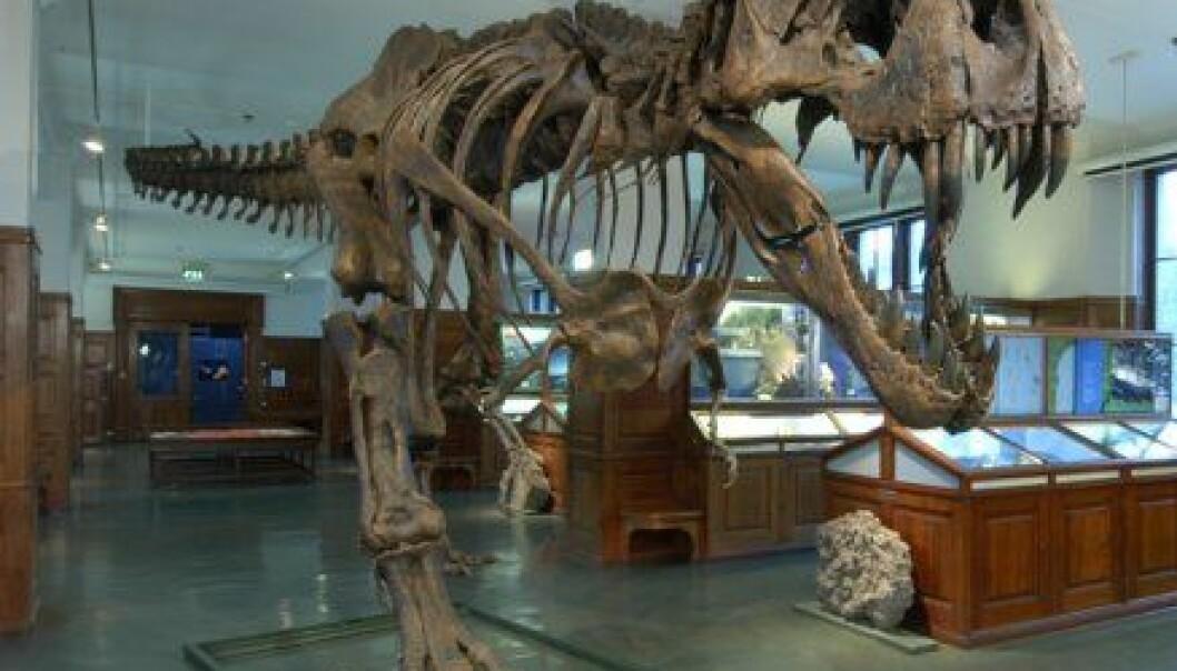 """""""Dette er Stan. Han har vært død i 65 millioner år, og levde som en av de siste dinosaurene på jorda. De første ekte rovdinosaurene utviklet seg for rundt 230 millioner år siden, og hersket på landjorda i 165 millioner år. Stan var med i den norske utstillingen Dødelige dinosaurer."""""""