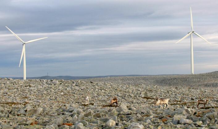 Reinsdyr ved vindmøller på Dyfjord-halvøya i Finnmark. (Foto: Jonathan Colman)