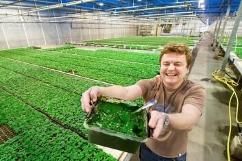 – Her er resultatet av noen dagers algeproduksjon, sier prosjektleder Truls Haugsrud ved Kristiansen Gartneri i Grimstad. På en god uke produseres fem kilo algepasta i testanlegget. (Foto: Eirik Vigsnes)