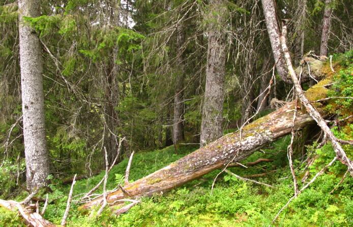 Mindre av gammelskogen rødlisteartene trenger