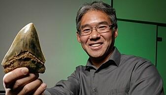 Kenshu Shimada er en av forskerne som nå har undersøkt en skjelettbit fra en megalodon, og som foreslår at disse store, utdødde haiene spiste søsknene sine inne i morens mage. Her viser han fram en megalodonn-tann.