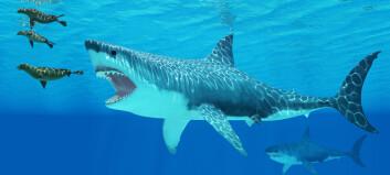 Ungene til monsterhaien spiste sine egne søsken inne i morens mage, tror forskere