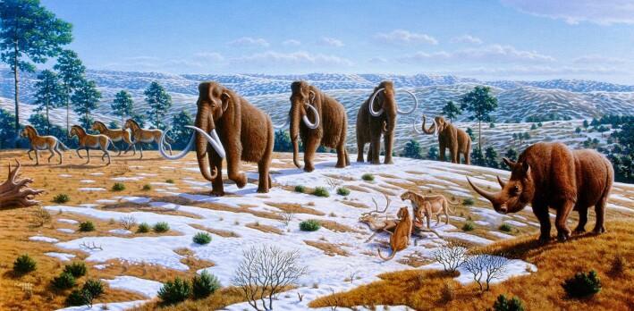 Et utvalg dyr som døde ut mot slutten av siste istid i Europa, slik en kunstner ser det for seg. Her er blant annet mammut og ullhåret neshorn representert.