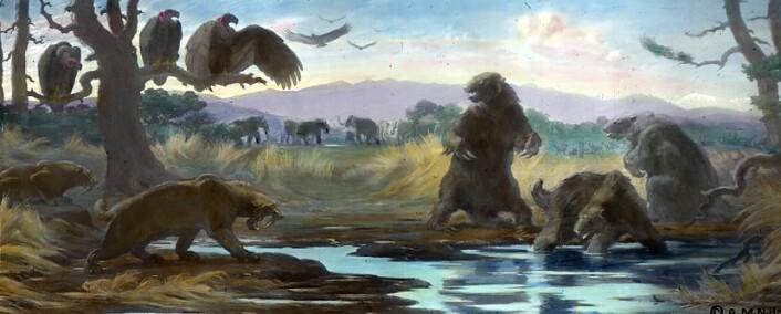 Dyrelivet rundt La Brea, slik det så ut for mer enn 10 000 år siden, slik en kunstner har sett det for seg.
