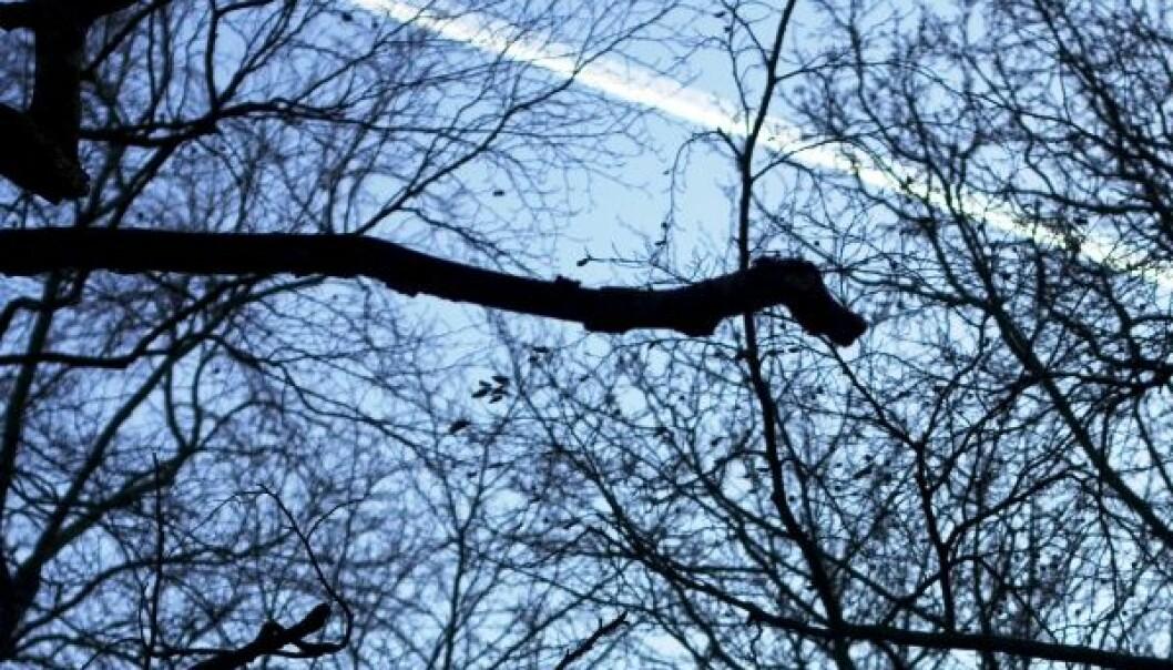 Med norske trær på flytanken
