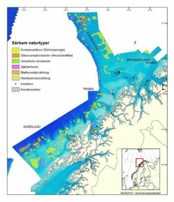 Slik kan sårbare naturtyper plasseres inn på kartet. (Foto: (Illustrasjon: Mareano/Havforskningsinstituttet))