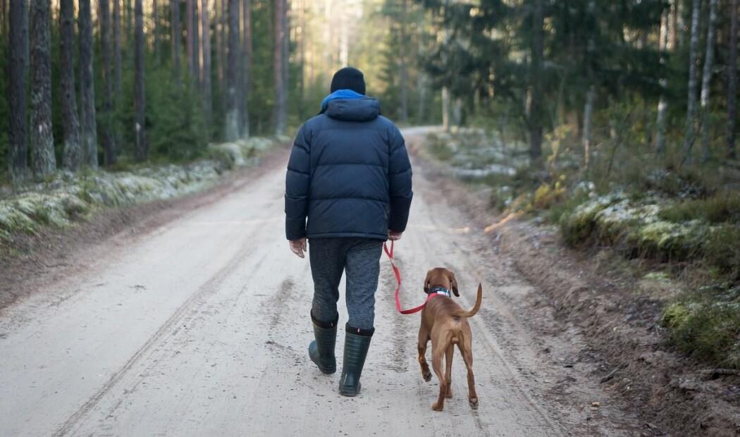 Bruk av korrigeringer i treningen kan redusere hundens velferd