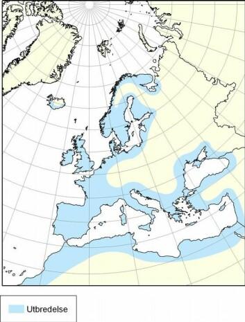 Anguilla anguilla (europeisk ål) er en av 15 arter ål i verden. Den finnes fra Nord-Norge til Marokko, og i hele Middelhavet og Østersjøen. (Foto: (Kart fra Havforskningsinstituttet))