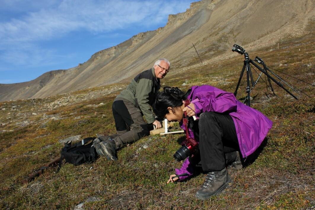Forskerne Arvid Odland og Gauri Bandekar tar prøver av vegetasjon og jordsmonn i Adventsdalen på Spitsbergen.