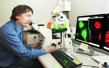 Terje Johansen studerer bilder av celler og kan visualisere søppelsekkene og deres innhold. (Foto: Bjørn-Kåre Iversen, Helsefak, UiT)