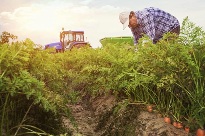 Undersøkelsene viste at informasjons- og holdningstiltak kan være effektive for å øke bruken av integrert plantevern (IPV).