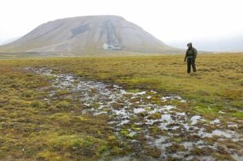 Grubbing gjør at store felter av vegetasjon blir borte eller ekstra utsatt for vær og vind som på sikt kan føre til vegetasjonsfrie områder på Svalbards tundra. (Foto: Jesper Madsen)