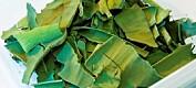 Håper på grønn revolusjon