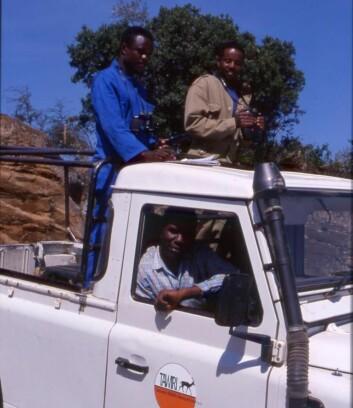 NTNUs forskningsprogram i Serengeti foregår i samarbeid med blant andre Tanzania Wildlife Research Institute. Her er forskere ute på dyretelling. (Foto: Eivin Røskaft)
