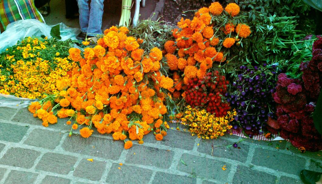 Mexican marigold, sett på gaten i Mexico under feriringen av Dia de los Muertos