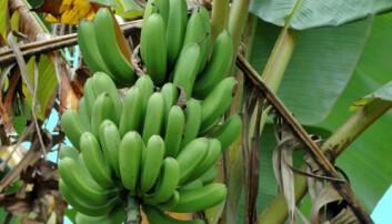 Banan. iStockphoto