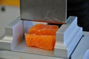 Testing av fasthet og tekstur i laksekjøttet. (Foto: Chris André Johnsen)