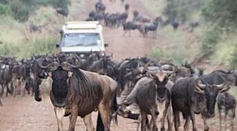 – Vei ødelegger ikke nasjonalpark