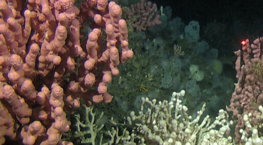 Finner artene på havbunn-kartet