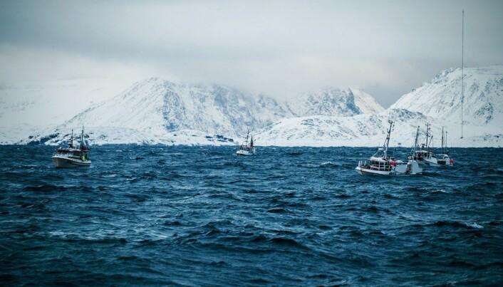 Foreløpig er det skreiens «fortropp» som har kommet. Kystflåten må vente litt på hovedmengden. Her ved Havøysund i Finnmark, 2019.