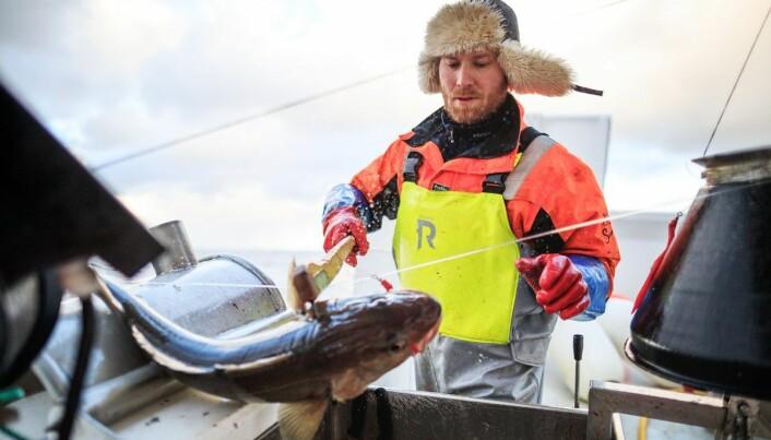 Fisker Bjørn Johannesen under skreifiske i Finnmark i 2019.