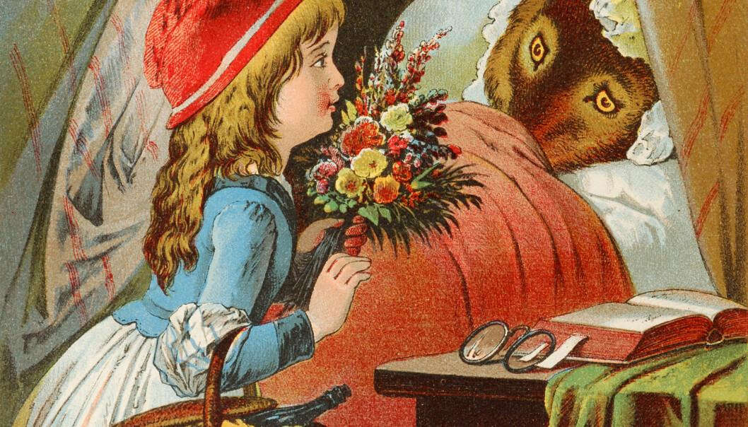 Rødhette og ulven. Illustrasjon av Carl Offterdinger fra slutten av 1800-tallet. (Illustrasjon: Wikimedia Commons)