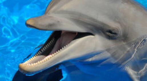Vil gi delfiner menneskerettigheter