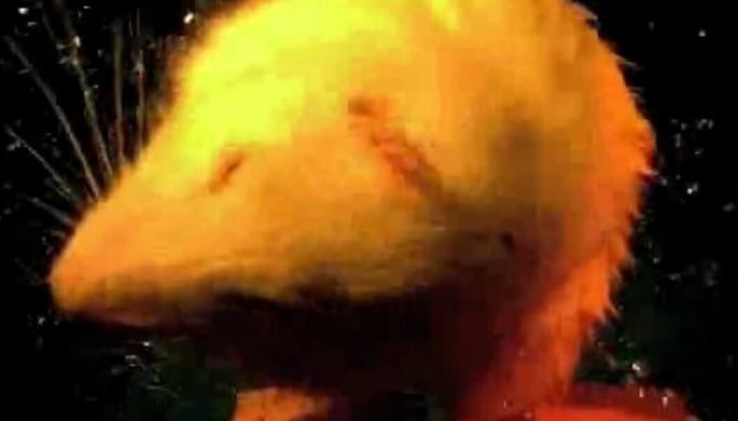 Video: Så raskt rister dyr seg tørre