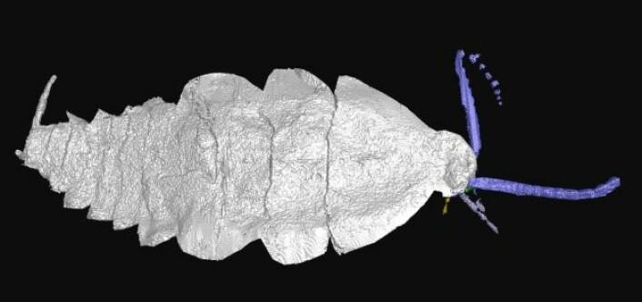 En slektning av av moderne kakerlakker? (Foto: University of Manchester)