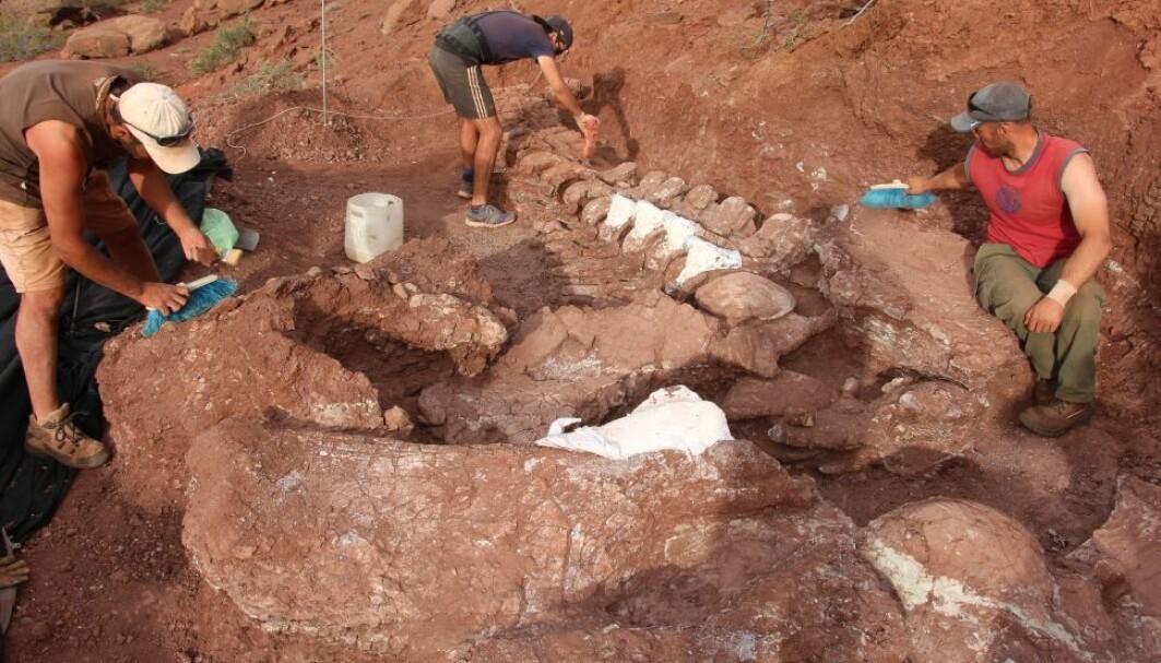 Her graver forskerne ut en gigantisk dinosaur sørvest i Argentina. Men er den verdens største?