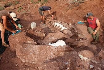 Dette kan være knoklene til verdens største dinosaur