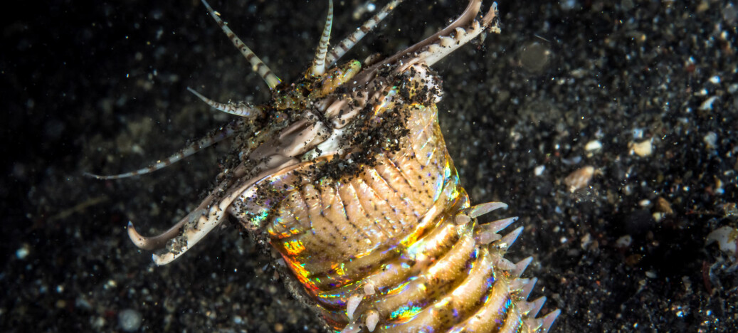 Lang «sand-orm» snappet byttedyr fra hulen sin for 20 millioner år siden