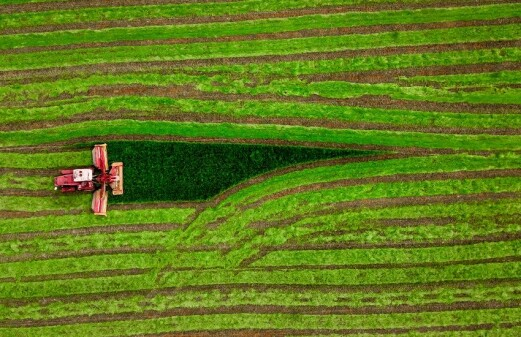 Abandoned cropland should be used to produce biofuels