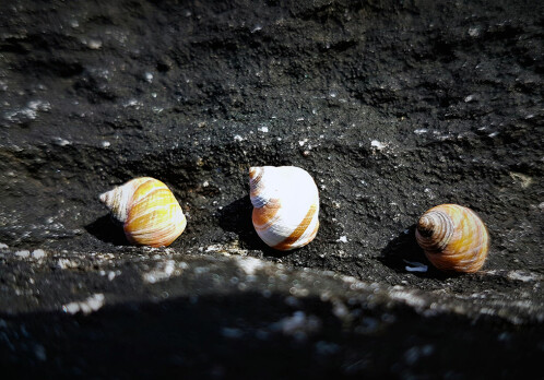 How do snails tackle extreme changes in temperature?