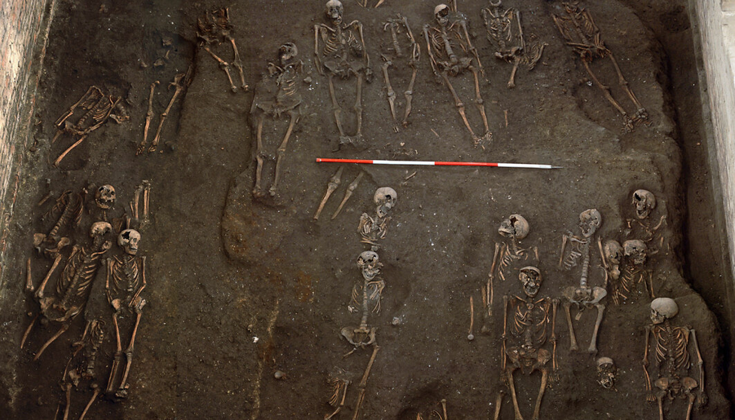 Levninger av begravde ved St John hospital i Cambridge.