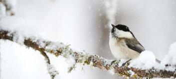 Vinteren er tøff for de aller minste