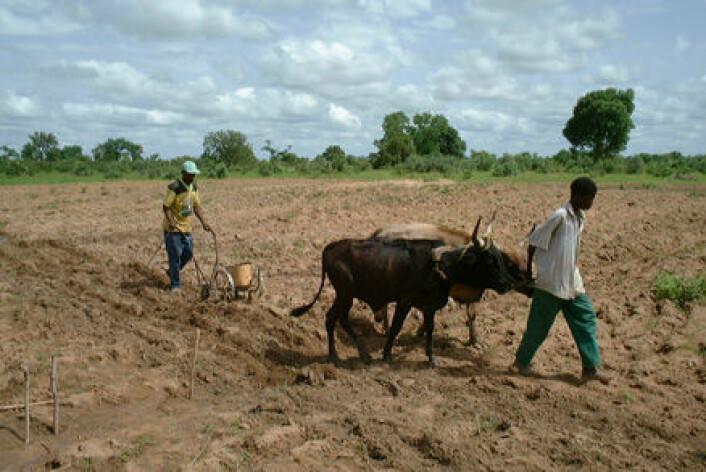""""""" Det er tøft å drive jordbruk i Mali. 65 prosent av landet ligger i Sahara-ørkenen."""""""