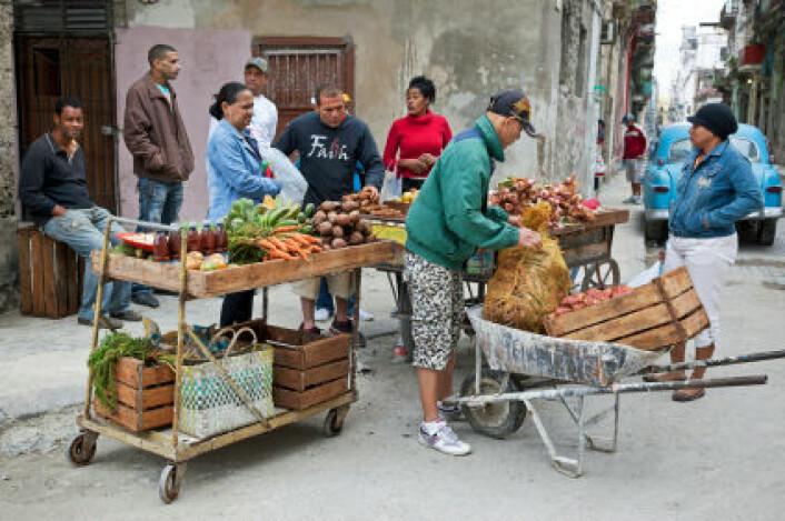 Grønnsakselger i Havanna med kunder. I dag er den daglig tilgangen på kalorier for innbyggerne på Cuba høyere enn før krisa på 1990-tallet. (Foto: Lya Cattel/iStockphoto)