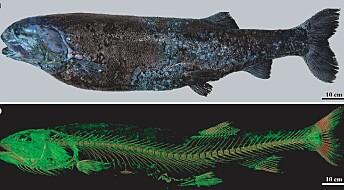 Stor, ny fiskeart dratt opp fra dyphavet