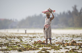 Climate adaptation projects create problems for vulnerable groups