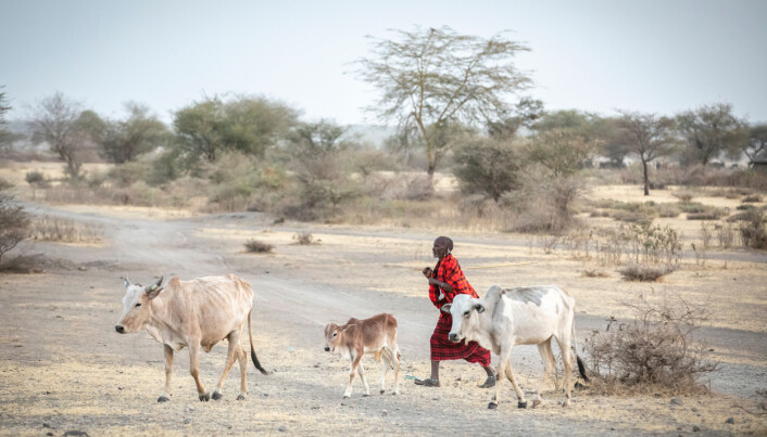 Climate adaptation projects threaten the livelihoods of pastoralists in Ethiopia.