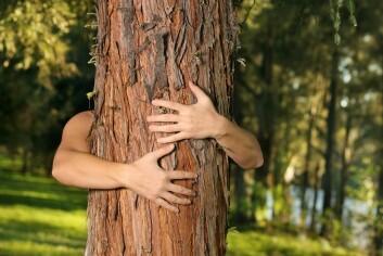 Blir du seksuelt opphisset av trær, så er du dendrofil. (Foto: Colourbox)