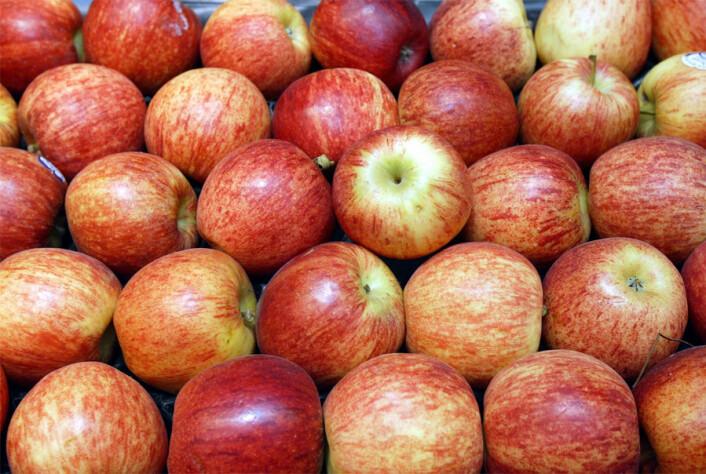 Man må spise om lag 100 epler om dagen for å få den effekten som forskningen har vist på mus. Men man kan vel nøye seg med skallet, hvor ursolsyren sitter. (Foto: Colourbox)