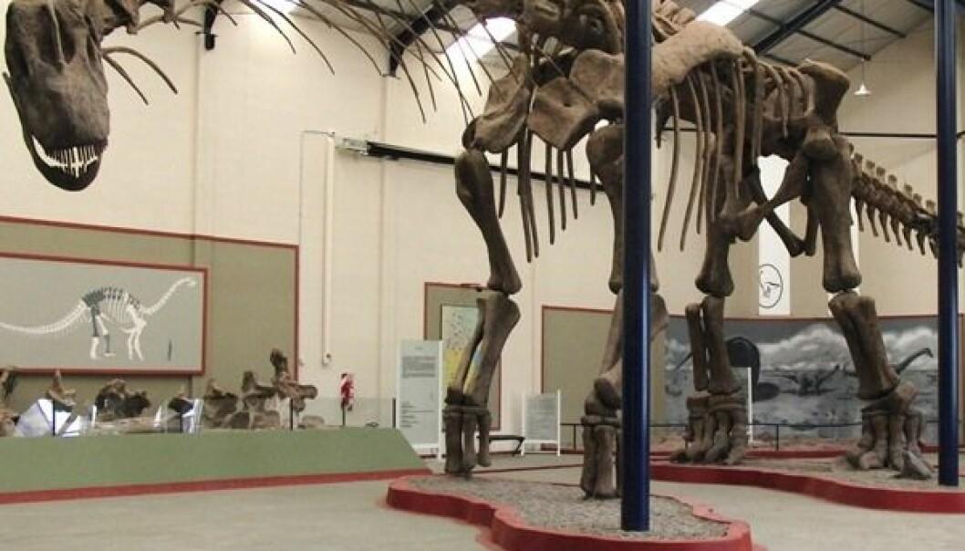 Paleontologer har rekonstruert Argentinosaurusens skjelett (foto: Dr. Bill Sellers)