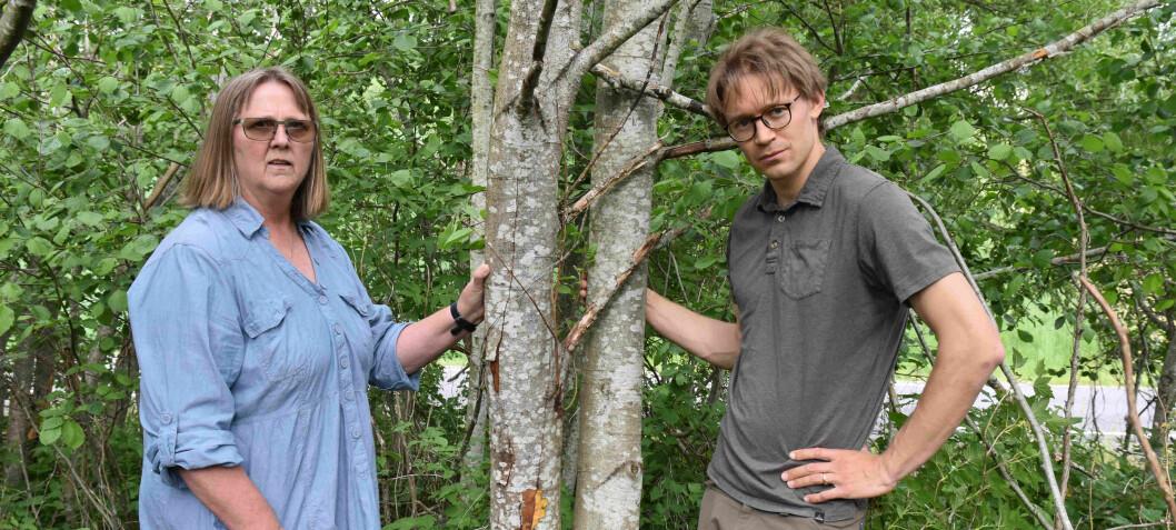 Importsmitte av usynlig plantedreper. Angriper busker og frukttrær