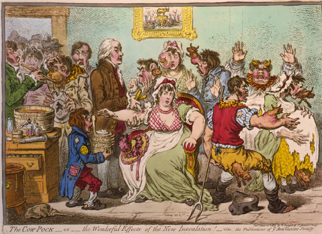 Puss fra blemmer på kuer med sykdommen kopper, ble brukt i den første moderne vaksinen. Mange var skeptiske, som denne karikaturen fra 1802 handler om.